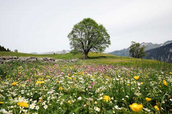 Frühlingserwachen: Staunen über den Schöpfer