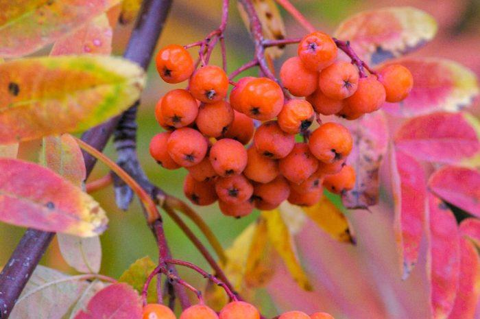 Herbst – ein Sinnbild für die Vielfalt unserer Lebensfrüchte